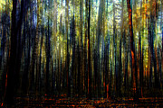 Mary Clanahan - Landscape Forest Trees...