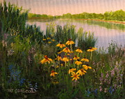 Patrick Paintings - Landscape painting Coneflowers by Patrick ODriscoll