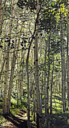 Mountain Bike Paintings - Landscape Painting - Upper Trail - 60 x 33 Oil  by Daniel Fishback