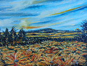 Drinka Mercep - Landscape sunflowers...