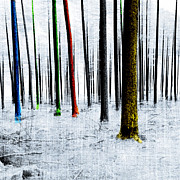 Mary Clanahan - Landscape Winter Forest...