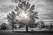 Trees Photo Posters - Landscape with sun shining though trees Poster by Elena Elisseeva