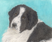 Landseer Paintings - Landseer Newfoundland Dog Art Portrait Animals Pets by Cathy Peek