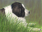 Landseer Paintings - Landseer Newfoundland Dog in Grass Pets Animal art by Cathy Peek