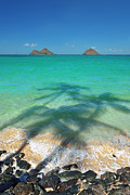 Eric Evans - Lanikai Beach Three Palm...