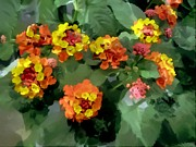 Verbena Paintings - Lantana  Flowers by Lanjee Chee