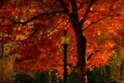 Red Maple Tree Photos - Lantern in autumn by Susanne Van Hulst