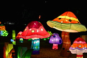 Jim Martin - Lantern Mushrooms