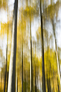 Pinaceae Framed Prints - Larch In Abstract Framed Print by Anne Gilbert