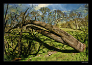 Blake Richards Framed Prints - Large Fallen Tree Framed Print by Blake Richards