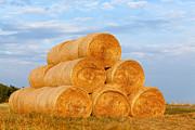Dry Pyrography Posters - large hay bales on the Meadow Poster by Boon Mee