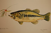 Largemouth Paintings - Large Mouth Bass Fish by Lynn Beazley Blair
