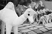 Toy Shop Photo Metal Prints - Large Soft Toy Stuffed Camel Souvenir At Market Stall In Nabeul Tunisia Metal Print by Joe Fox