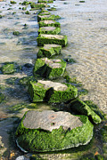 Stepping Stones Prints - Large stepping stones across a stream Print by Stephen Rees