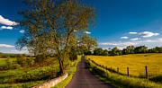 Scenic Drive Pastels Prints - Large tree on a road through farmfields and rolling hills in Antietam National Battlefield Print by Jon Bilous