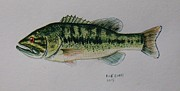 Largemouth Paintings - Largemouth Bass by Richard Goohs