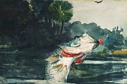 Largemouth Paintings - Largemouth Black Bass by Pg Reproductions