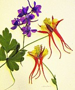 Pencil Drawing Photos - Larkspur and Columbine by Chris Berry