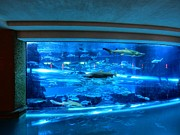 Fish Tank Prints - Las Vegas 067 Print by Lance Vaughn