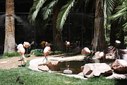 Flamingo Prints - Las Vegas - Flamingo Casino - 12127 Print by DC Photographer