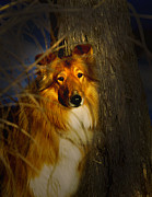 Randall Branham Prints - Lassie Come Home Look a Like Print by Randall Branham