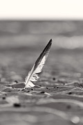 Seagull Photos - Last Days of Summer in Black and White by Sebastian Musial