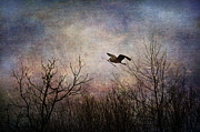 Animal Photography Digital Art - Last Delivery Of The Day by Dale Kincaid