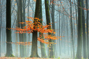 Autumn Landscape Pyrography Prints - Last Leaves Print by Lars Van de Goor
