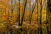 Medford Photos - Last of Autumns Color by Louis Dallara