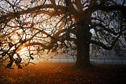Gorgeous Photos - last of the Autumn wine by John Chivers