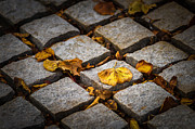 Fallen Leaf Photos - Last Warmth by Alexander Senin
