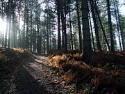 Sledge Originals - Late Afternoon on Cannock Chase by Jean Walker