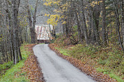 Country Dirt Roads Photos - Late Autumn Back Road by Alan L Graham