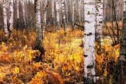 Mary Amerman - Late Autumn Glow