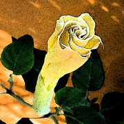 Blooming Digital Art - Late Bloomer by L T Sparrow