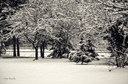 Snow On Branches Prints - Late on a Cold Winter Day Print by Mary Machare