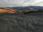 Grasslands Prints - Late Summer Evening in the Santa Teresa Hills Print by Stu Shepherd
