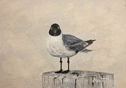 Stan Tenney - Laughing Gull