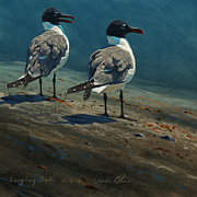 Sea Birds Posters - Laughing Gulls Poster by Aaron Blaise