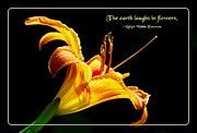 Quotation Prints - Laughter of Flowers Print by Mike Flynn