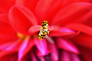 Lady Bug Framed Prints - Launch Framed Print by Emily Stauring