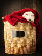 Basket Photos - Laundry Day by Edward Fielding