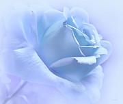 Rose Portrait Photos - Lavender Blue Rose Flower by Jennie Marie Schell