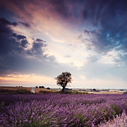Azur Framed Prints - Lavender dream Framed Print by Matteo Colombo