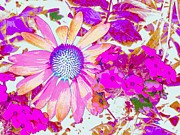 Pussy Willows Posters - Lavender Echinacea Poster by Annie Zeno