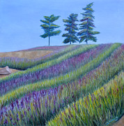 Jennifer Richards - Lavender farm