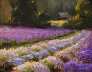 Karen Whitworth - Lavender Farm Sunset