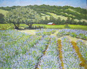 Sonoma County Originals - Lavender Field by David  Walker