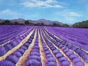Landscape Prints Drawings Framed Prints - Lavender Field in Provence Framed Print by Anastasiya Malakhova