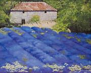 Rebecca Matthews - Lavender Fields